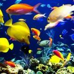 Akvaristika-tropske-ribe-1