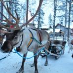 Lapland-Sami-people