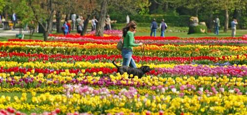 Dani tulipana - arboretom Volčji Potok