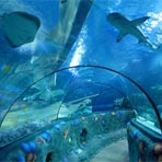 gardalan-sealife-tunel