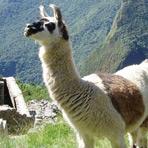 Peru i Bolivija – Inca Explorer